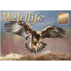 2011 Animal Calendars Wildlife Of Britain   12 Month