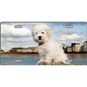 Bichon Frise Dog Pet Novelty License Plates Full Color Photography
