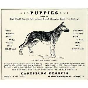1929 Ad Kanesburg Kennels Dog Breeders German Shepherd Puppies Pets